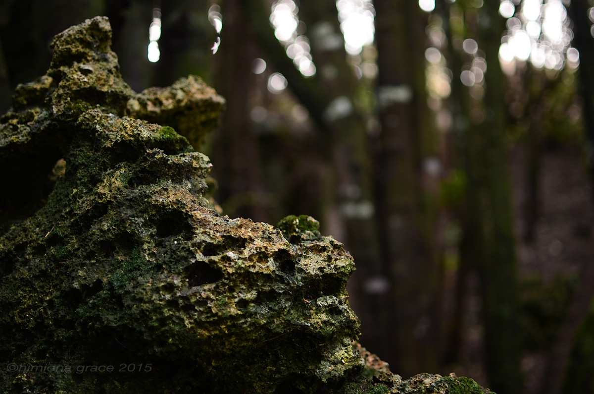Rekohu-limestone-bush1