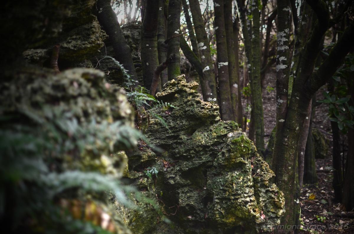 Rekohu-limestone1