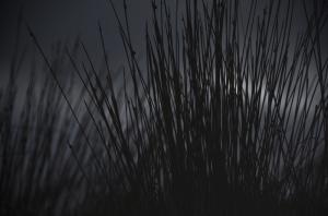 dark-grass